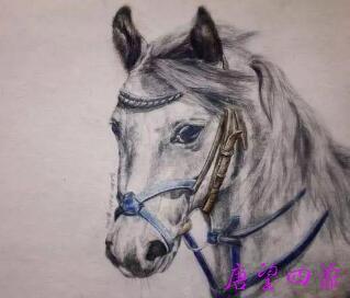 你是哪一种马?四种马喻-从不同根器 顿悟人生