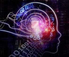培养外星脑!猪脑不可能一下子变聪明脑!